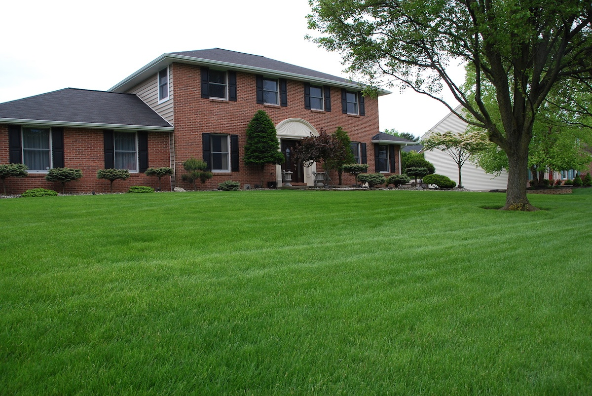 Lawn care knowledge as the ultimate solution.