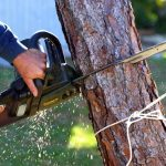 Why you need the services of a professional tree removal company?